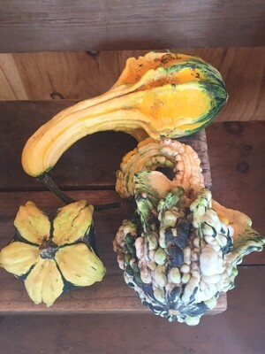 SGF Miniature Gourd (1)