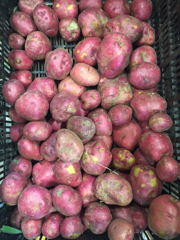 *Maple Row Farm Potatoes 1 lb - Red Bliss