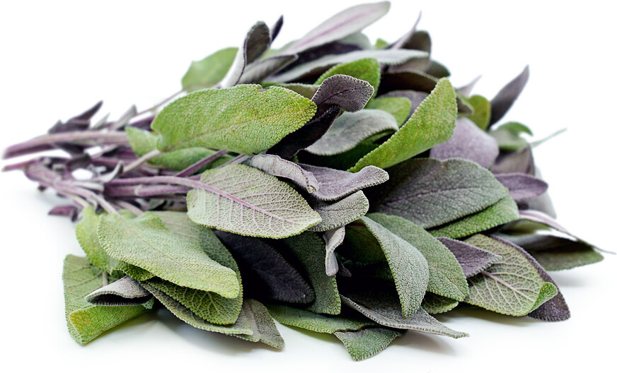 SGF Herb Bunch Sage