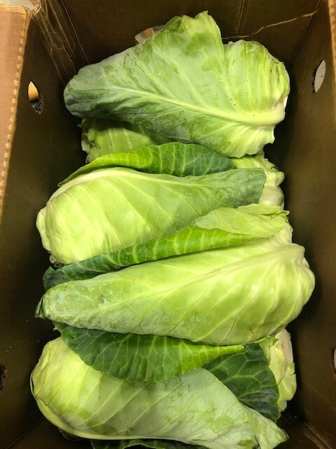 *Kitchen Garden Farm Green Arrowhead Cabbage
