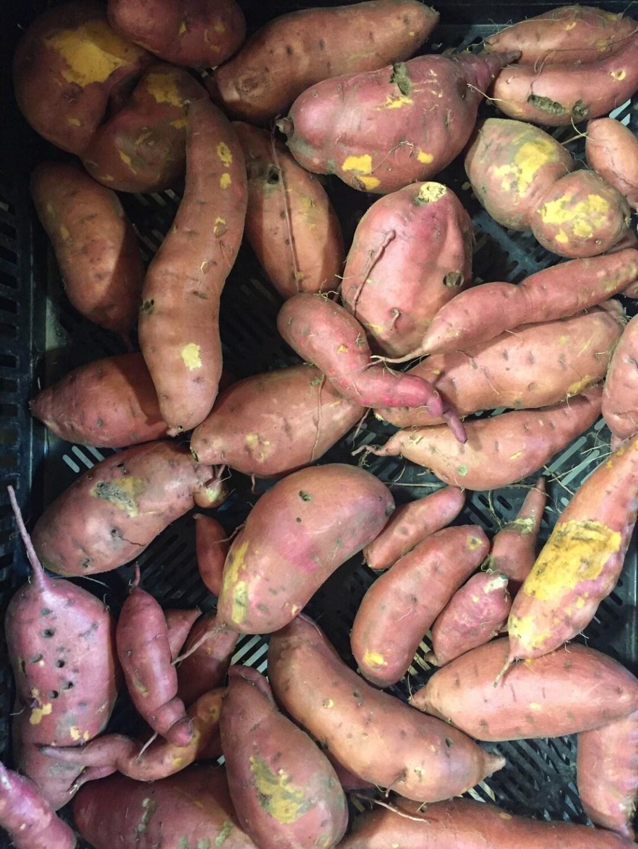 *SGF Sweet Potatoes 1 lb - Orange