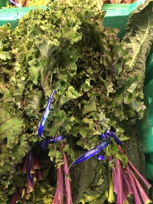 *SGF Bunched Kale Purple Curly