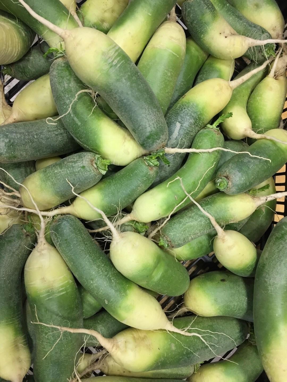 *Simple Gifts Farm GREEN DAIKON 1lb