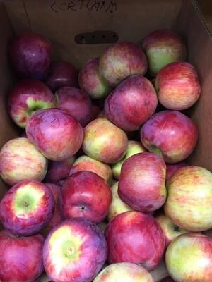 Apples $2/lb - Cortland