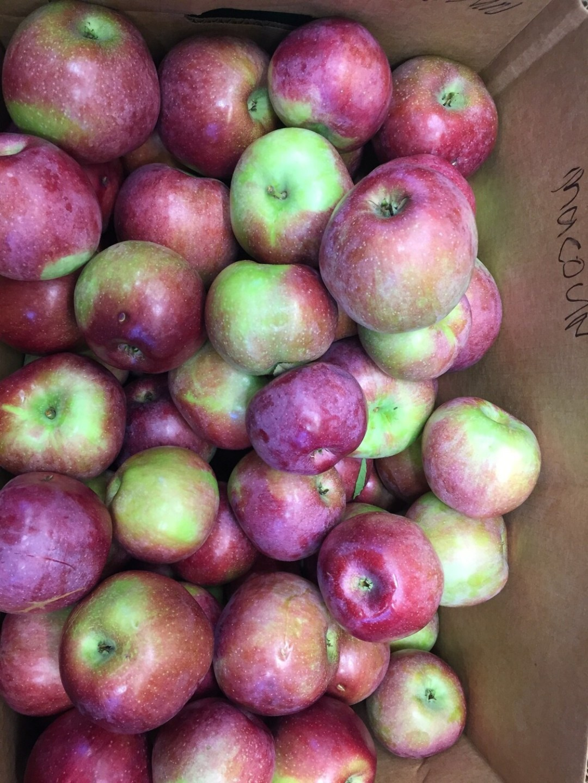 Apples $2/lb - Macoun