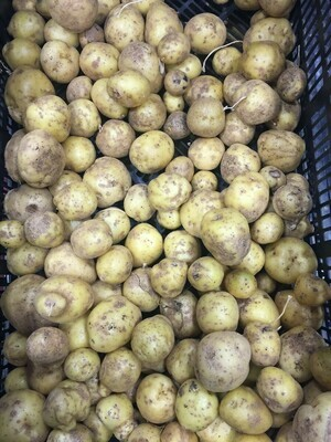 Non-SGF Yukon Gold Potatoes 50 lb Bag
