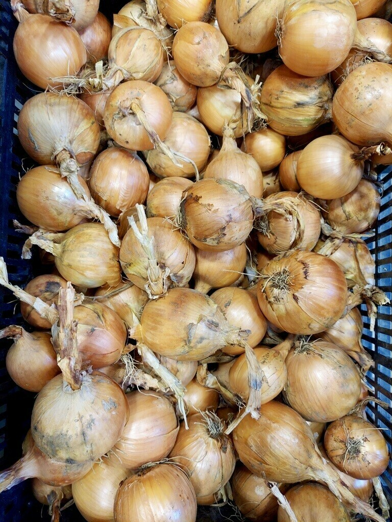 *Juniper Hill Farm Yellow Onions 1lb