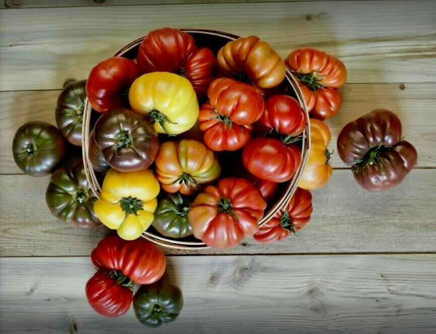 Five College Farm SECONDS Heirloom Tomatoes 1 lb