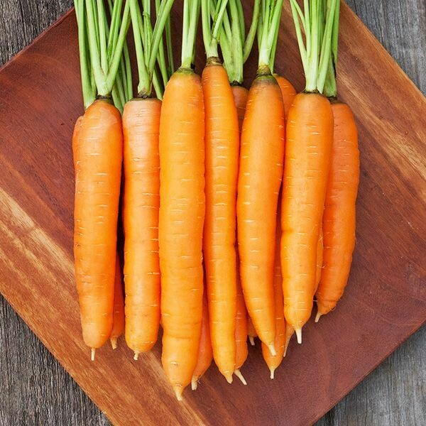 High Mowing SEEDS Dolciva Carrots