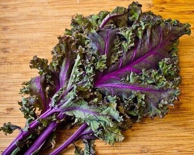 *SGF Bunched Kale Red Russian