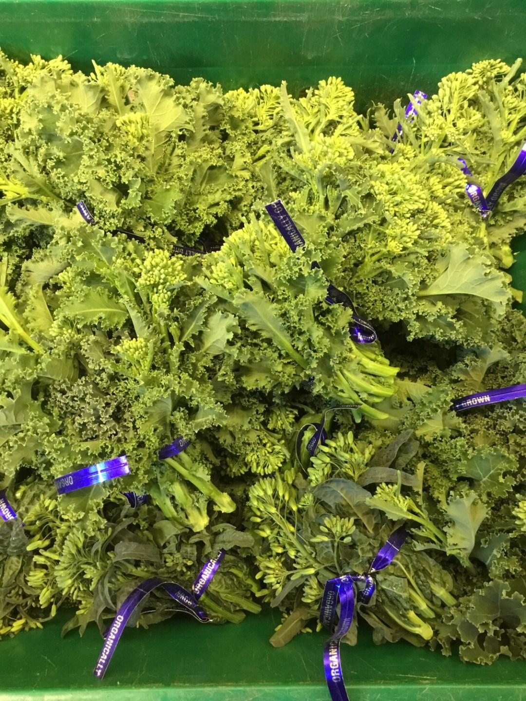 *Simple Gifts Farm Kale Raab Bunch