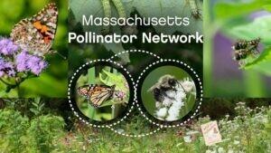 Donation to Massachusetts Pollinators Network