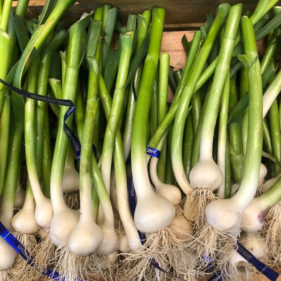 Garlic, Green - Bunch/Piece *  Simple Gifts Farm