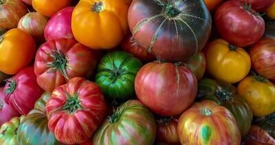 Tomatoes , Heirloom - 1 lb ** SGF
