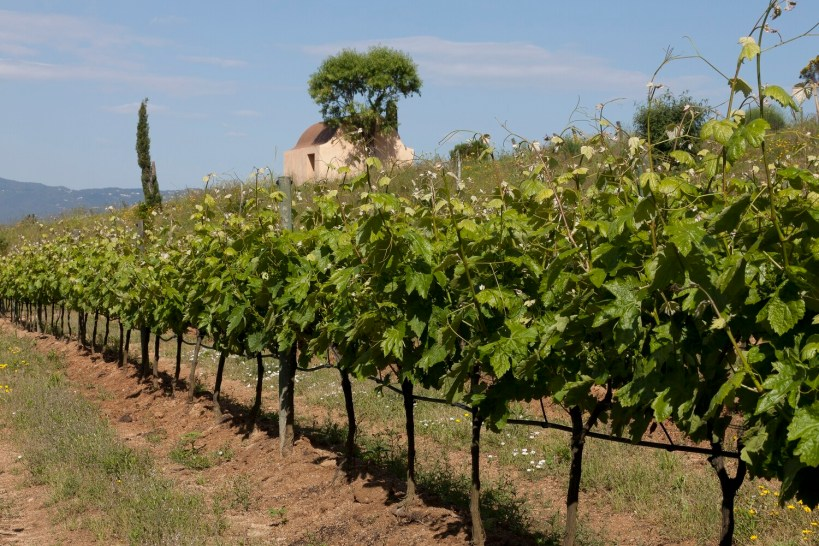 Xec regal visita a les vinyes i tast del cava Ses Vernes