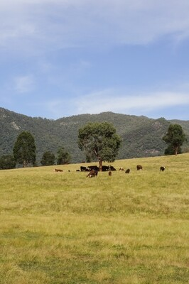 Myrtleford Hillside