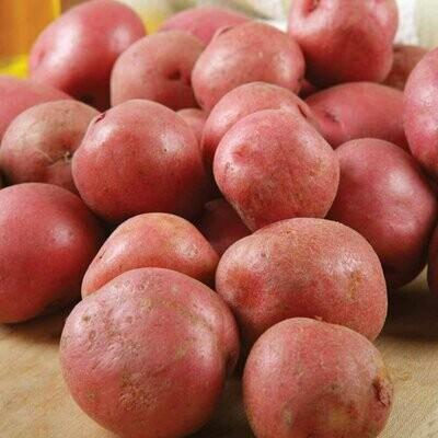 Organic Irish Red Potato 100g
