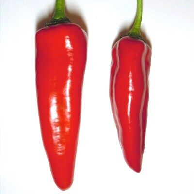 Anaheim Chile Seeds