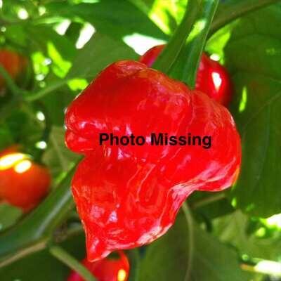 Cobra Pepper Seeds