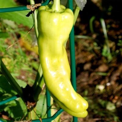 Cubanelle Pepper Seeds