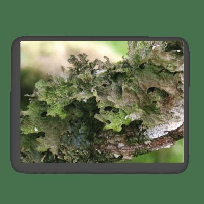Green Lichen Fine Art Poster