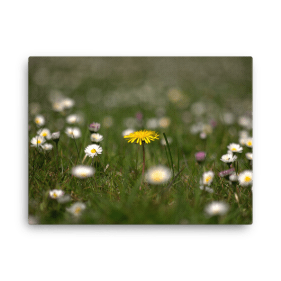 Meadow Flower  Fine Art Poster