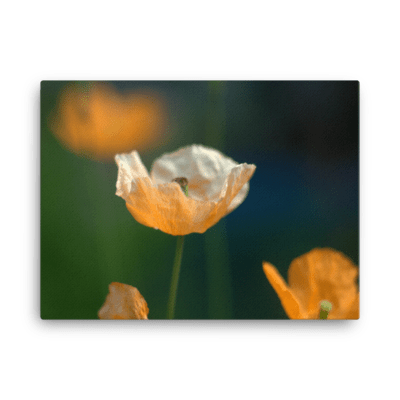Poppies Fine Art Poster
