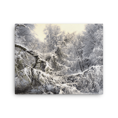 Snowy Spruce Canvas Print
