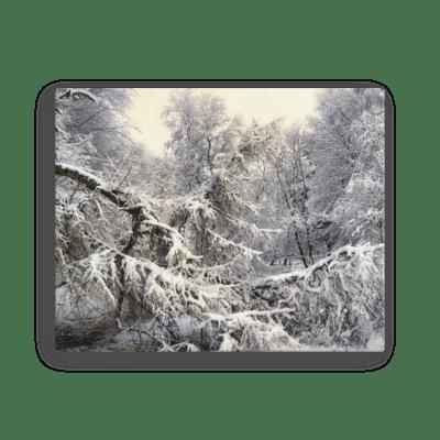 Snowy Spruce Fine Art Poster