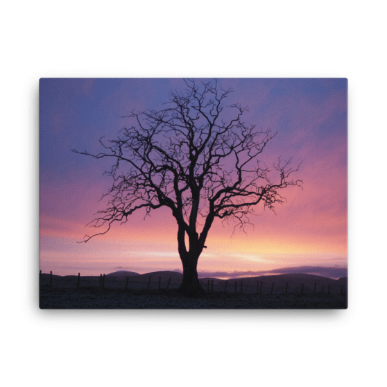 Sunset Elm Canvas Print