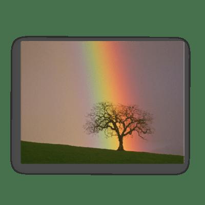 Rainbow Elm Fine Art Poster