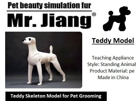 Teddy Model Dog