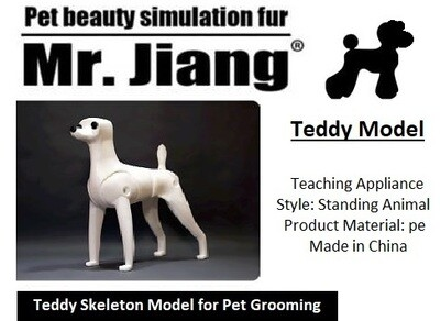 Teddy Model Dog