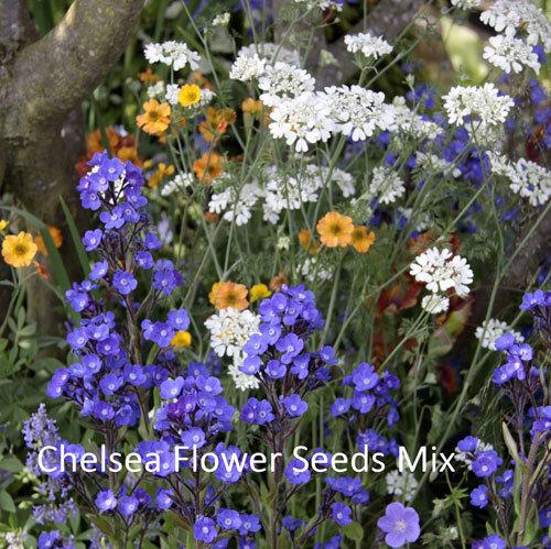 Chelsea Flower Seeds Mix