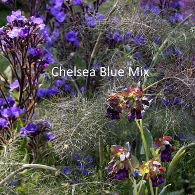 Chelsea Blue Seeds Mix