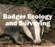 Badger Ecology and Surveying (Exeter): Saturday 1st May 2021