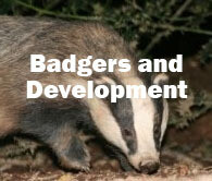 Badgers and Development (Hampshire): 14th October 2021