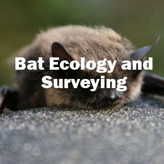 SOLD OUT - Bat Ecology and Surveying (Exeter): 7th and 8th May 2021 -