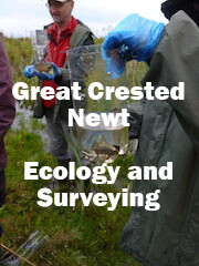 Great Crested Newt Ecology and Surveying (Dorset): Spring 2021