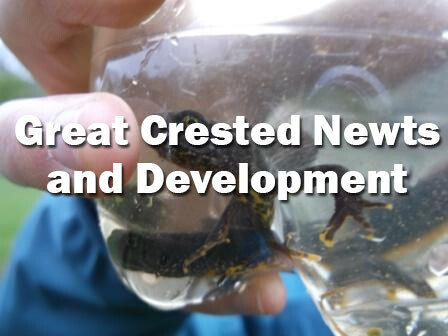 Great Crested Newts and Development (Dorset): Spring 2021