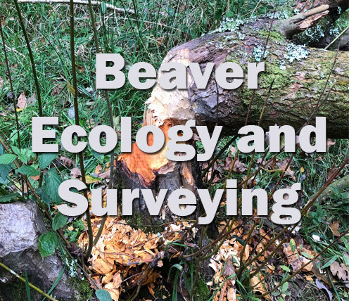 Beaver Ecology and Surveying (Devon) 30th April 2021