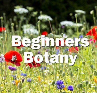 Beginners Botany (Exeter) - 2nd & 3rd July 2021