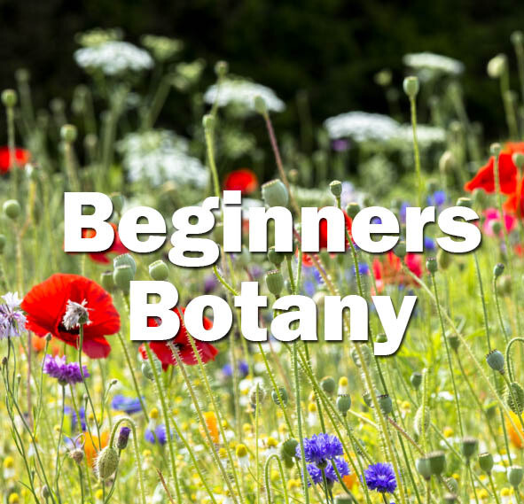 Beginners Botany (Hampshire): 2022 Date to be confirmed