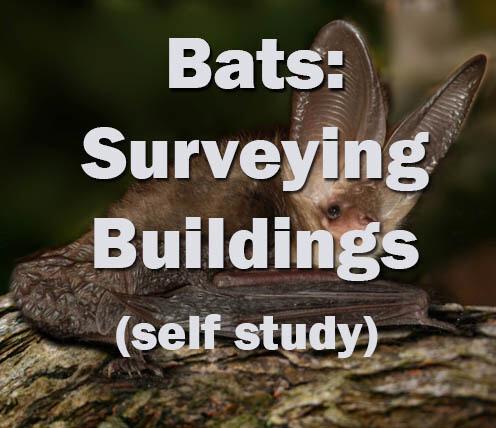 Bats: Surveying Buildings for Bats self study course