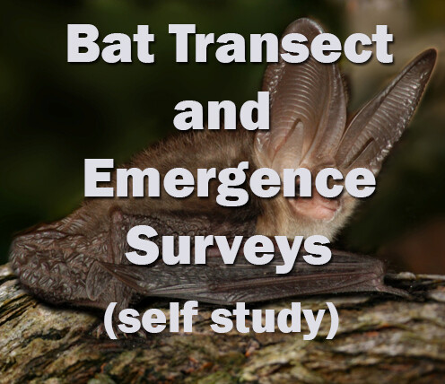 Bat Surveying - Transect and Emergence Surveys Self Study Course