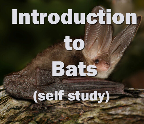 Bats: Introduction to Bats **NEW** Self-study course