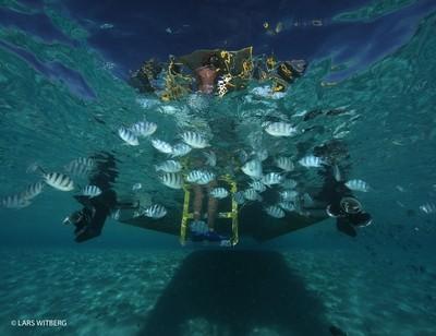 Sergant major fish under boat