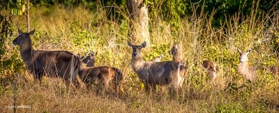 Water buck, Niassa, Africa