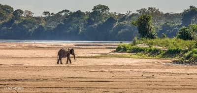 Elephant, Lugenda, Afracia