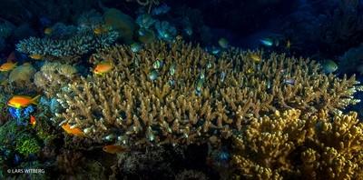 Coral Reef, Ibo Island
